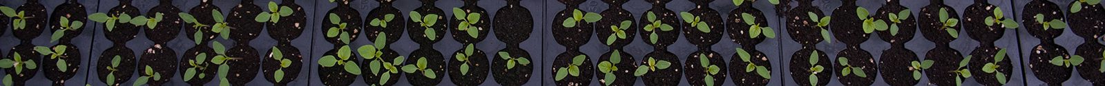 overhead view of seedlings