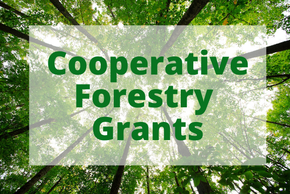 background of forest with Cooperative Forestry Grants written in front