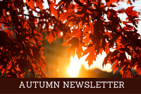 Autumn Newsletter written with sun shining behind red leaves